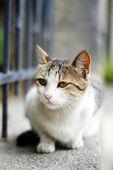 Close up of homeless kitten outdoor — Stock Photo