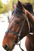 Portrét koně — Stock fotografie