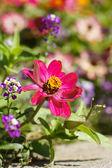 Jesienne kwiaty — Zdjęcie stockowe