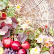 Autumn flowers and fruits — Stock Photo #33862033