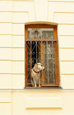 Dog in a window — Stock Photo