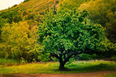Solitary tree on grassy hill in the forest — Stock Photo