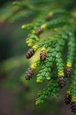 Madera de primavera — Foto de Stock