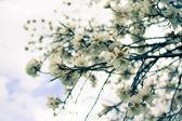 Spring time — Stock Photo