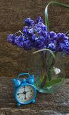 ヒヤシンスの花 — ストック写真
