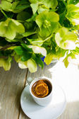 Helleborus flowers in a vase — Foto de Stock