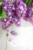 Lilac flowers in the vase — Stock Photo