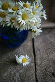 Fleurs de marguerite — Photo