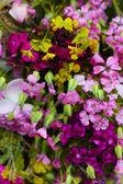 Spring time flowers — Stockfoto