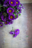 Aster flowers in a vase — Stock Photo