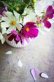 Coreopsis flower in interior — Stock Photo