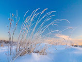 Winter scene — Stock Photo