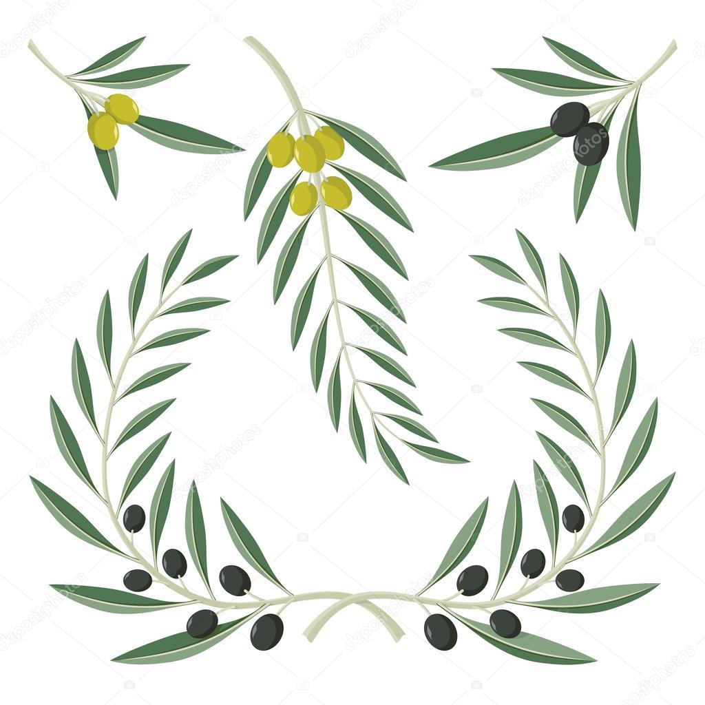 各种橄榄树枝和孤立的白色背景上的花环