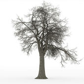 Ash tree leafless in 100Mpix — Stock Photo