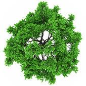 Bovenaanzicht van de boom — Stockfoto