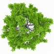Stock Photo: Tree top view