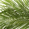 Leaves of palm tree — Stock Photo #12484138
