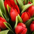 Red tulips — Stock Photo #21334619