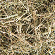 Golden hay — Stock Photo