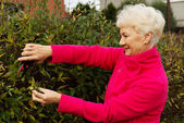 An old lady is cutting bushes. — Stock Photo