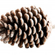 One separate cone. — Stock Photo #36001887