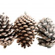 Three cones over white. — Foto Stock