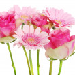 A bouquet of pink gerbera flowers and roses. — Stock Photo