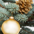 Christmas ball and cone handing on a tree. — Stock Photo