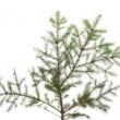 Photo: Green fir isolated on white.