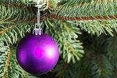 Christmas ball handing on a tree. — Stock Photo
