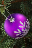 One violet christmas ball hanging on a tree. — Stock Photo