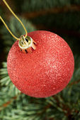 One red christmas ball hanging on a tree. — Stock Photo