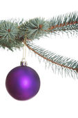 One separate christmas ball hanging on a fir. — Stock Photo