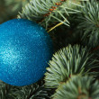One christmas ball over tree. — Stock Photo