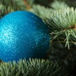 One christmas ball on a tree. — Stock fotografie