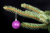 One christmas ball handing on a twig. — Stok fotoğraf