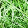 Grass — Stock Video
