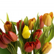 Stock Photo: Bouquet of fresh living tulips.