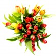 Fresh spring tulip flowers — Stock Photo