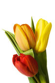 Fresh tulips flowers. — Stock Photo