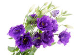 Bouquet of violet fresh flowers. — Stock Photo