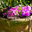 Flowerpot with petunia — Stock Photo #14066972