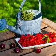 Fruits with watering can — Stock Photo