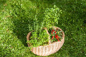 Herbs in a garden — Stock Photo