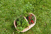 Herbs in a basket — Stock Photo