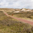 Stock Photo: Dune landscape in Netherland