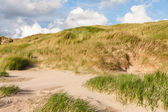 Dunes at the north sea — Stock Photo