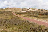 Dune landscape in the Netherland — Stock Photo