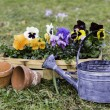 Pansies in a basket — Stock Photo #35946087