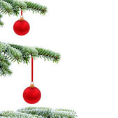 Christmas evergreen tree with red glass bal — Stock Photo